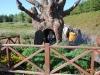 gops-kowala-magiczne-ogrody-04